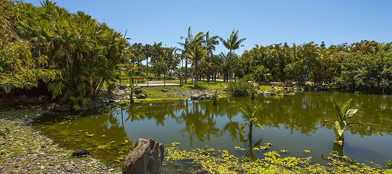 Lago de Madagascar en el Palmetum de Santa Cruz de Tenerife