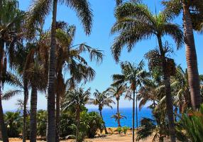 Vistas del palmetum, con palmeras de Asia y Australia