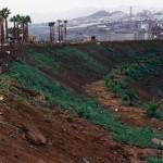 Primeras plantaciones en la ladera norte, destinada a la vegetación dedicada al bosque termófilo de Canarias